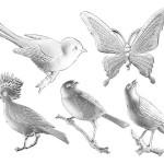 Dresdner Pappe geprägte Vögel und Schmetterlinge